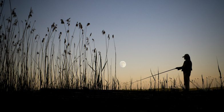 Bringing in the catch of the day fishing by the moon phase for Fishing moon phase